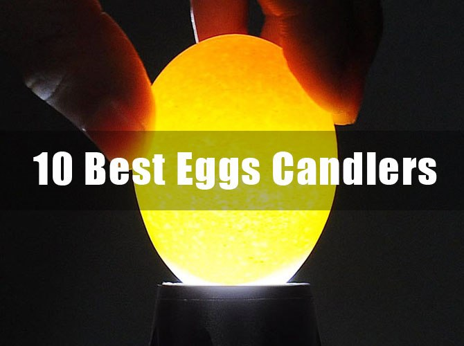 10 Best Egg Candlers For Sale Reviews The Ultimate Guide