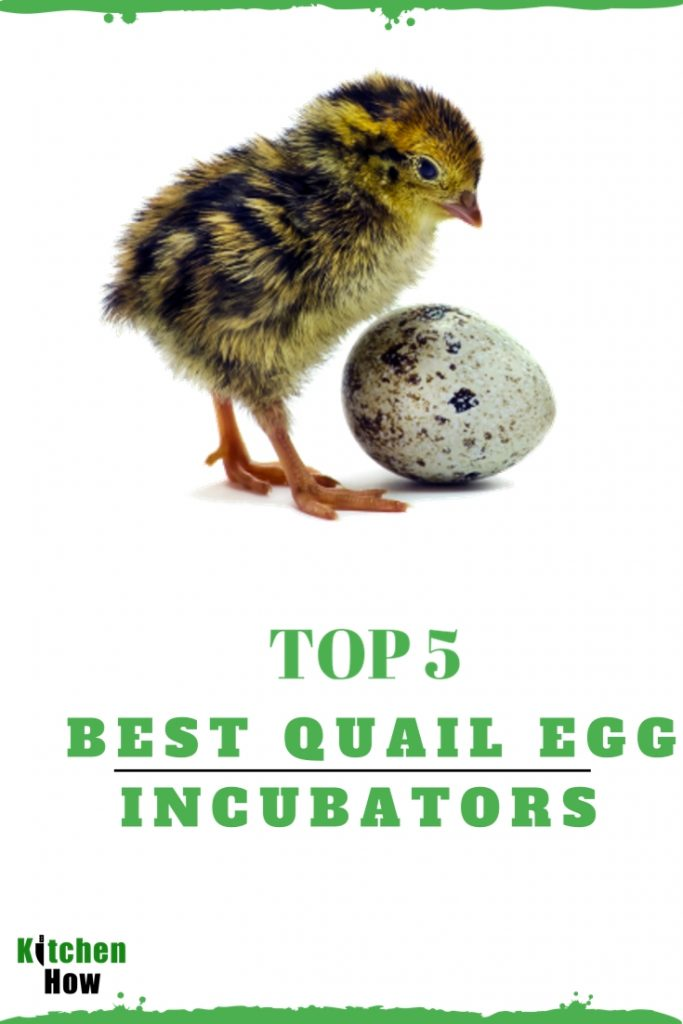 best quail egg incubators