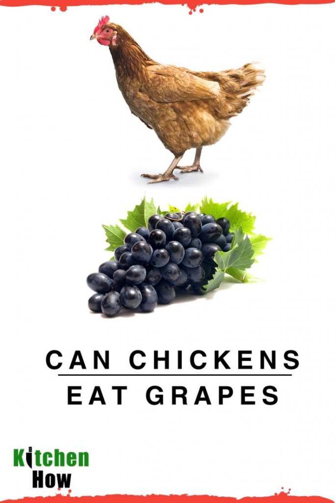 Can Chickens Eat Grapes