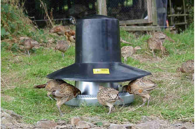Galvanised (40kg) Tube Feeder with Top Hat Rain Cover