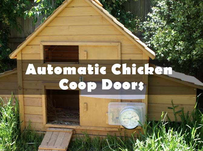 Top 10 Best Automatic Chicken Coop Doors For Sale Reviews